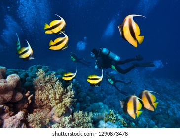 Underwater image of coral reef, School of Butterfly Fish and group of divers.