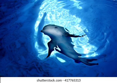 Underwater image of a dolphin swimming up to the light.