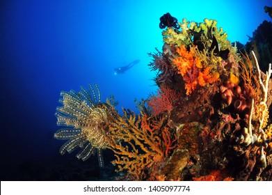underwater image of sipadan island, malaysis