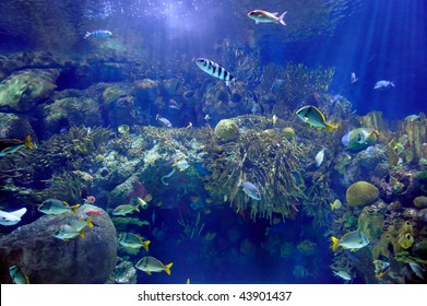 underwater image of tropical fishes