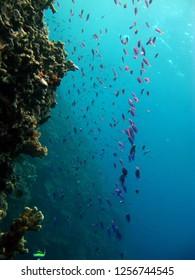 underwater indonesia gorontalo paradise