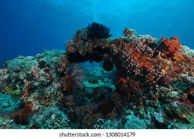 Underwater Komodo Island