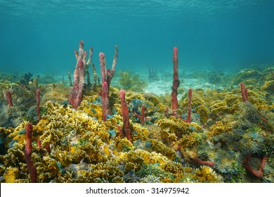 Underwater landscape, colorful seabed composed by sea sponges and fire coral, Caribbean sea, Central America
