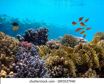 Underwater landscape with coral formations and tropical fish, Red Sea, Egypt