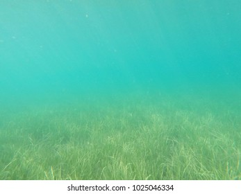 Underwater landscape with sea grass covered sea bed in mediterranean sea
