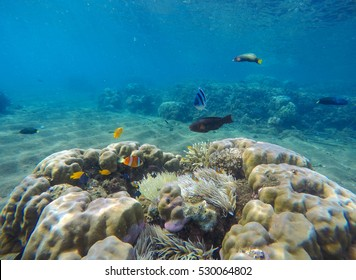 Underwater landscape with tropical fishes. Coral reef landscape with parrotfish. Clean blue sea water in tropical lagoon. Exotic nature undersea. Snorkeling photo of coral ecosystem. Colorful sea life
