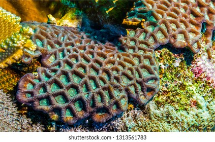Underwater life background. Underwater macro world view. Underwater life view. Underwater world background