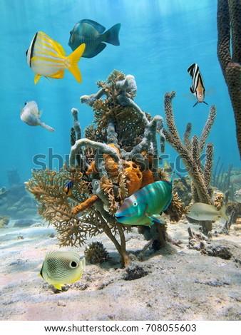 Underwater life in the