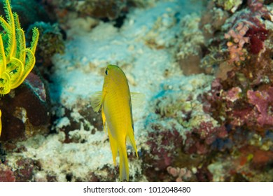 underwater life coral reef fi