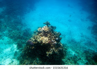 Underwater life. Coral reef in Red near Egypt coast. Flocks of tropical fishes are dancing around corals.