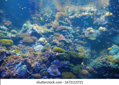 Underwater life, huge aquarium with corals and fishes