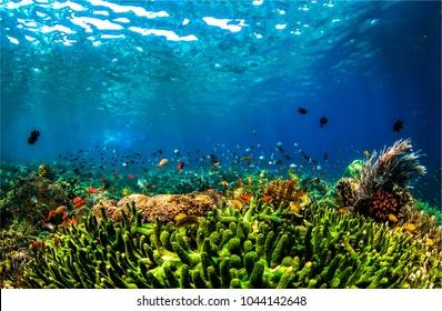 Underwater life landscape. Beautiful underwater world panorama