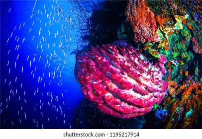 Underwater life landscape. Beautiful underwater world scene. Underwater world coral fishes of Red Sea. Underwater world view