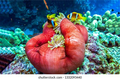 Underwater life landscape. Beautiful life underwater. Underwater world scene. Underwater macro world view