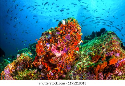 Underwater life landscape. Underwater coral reef scene. Beautiful underwater world coral fishes of sea. Underwater world scene