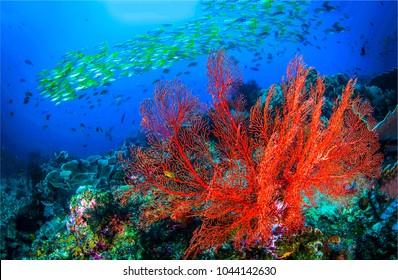 Underwater life landscape. Red coral underwater view
