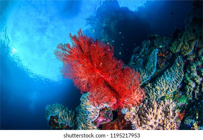 Underwater life landscape. Red coral underwater scene. Underwater coral fishes view. Underwater world coral fishes landscape