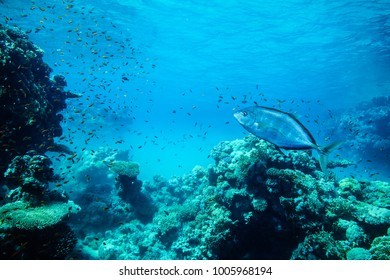 Underwater life landscape in the Red Sea