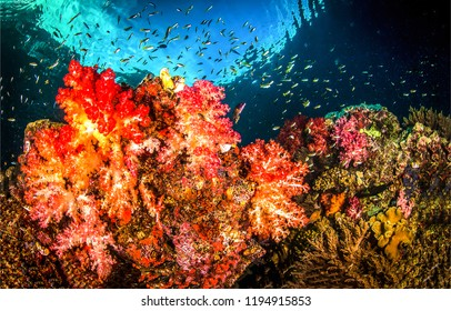 Underwater life landscape. Underwater world coral fishes panorama. Underwater coral fish shoal view. Underwater world coral scene