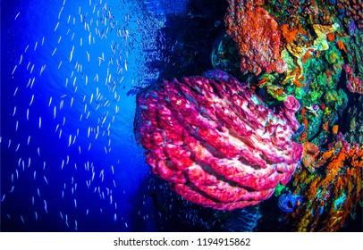 Underwater life landscape. Underwater world coral fishes scene. Underwater world coral fish shoal view. Underwater life scene