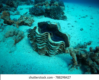 underwater life of red sea