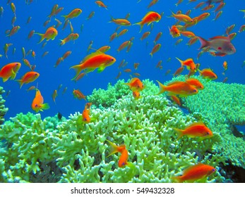 underwater life of tropical sea. vibrant colors. Red Sea. Egypt