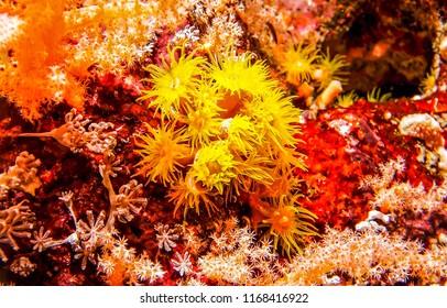 Underwater life view close up. Underwater macro world view. Underwater macro world life scene