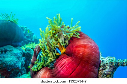 Underwater life view. Underwater macro world scene. Underwater world view. Underwater photo