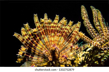 Underwater macro life scene. Underwater world view. Underwater life landscape. Deep water underwater world