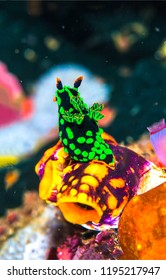 Underwater macro life. Macro life view underwater. Underwater world life macro. Underwater life view