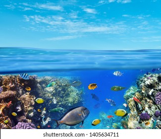 Underwater marine life of the Red Sea and blue sky. Colorful coral reef fishes and reefs.