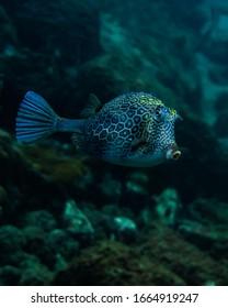 Underwater Marine Life reef Brazil