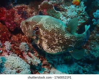 Underwater marine life in the sea