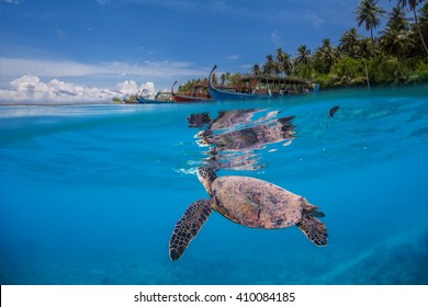 Underwater marine wildlife postcard. A turtle floating under water surface with shoreline and maldivian boats. Seascape tropical image with palm trees from Maldives