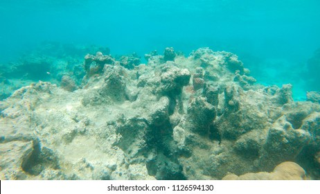 UNDERWATER: Once colorful corals are now left dead on the seabed due to environmental change. Vast coastal reef disappearing and beautiful sealife dying in tropical sea. Bleak lifeless coastal reef.