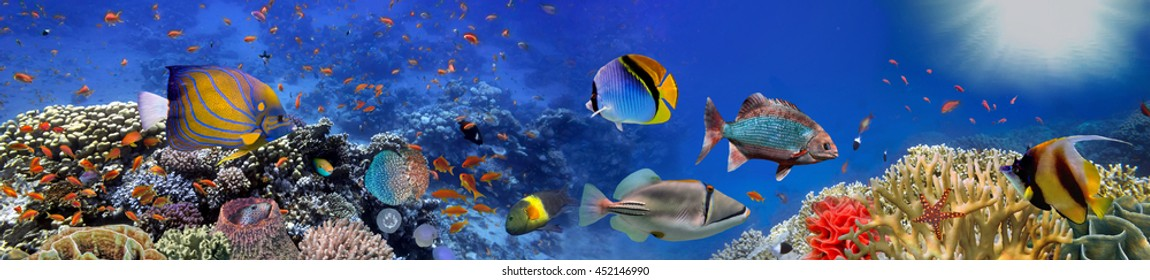 Underwater panorama with coral reef and fishes. Red Sea, Egypt.