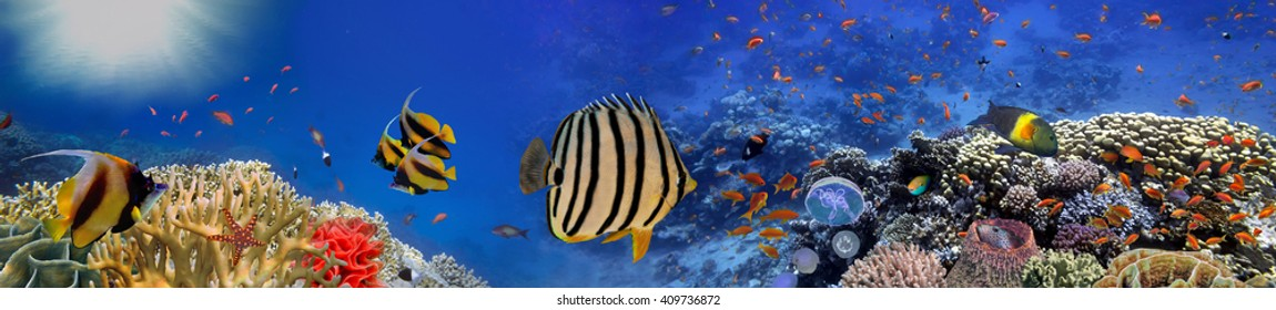 Underwater panorama with turtle, coral reef and fishes. Red Sea, Egypt
