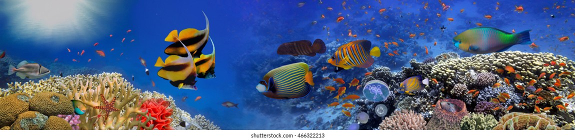 Underwater panorama with turtle, coral reef and fishes. Red Sea, Egypt.