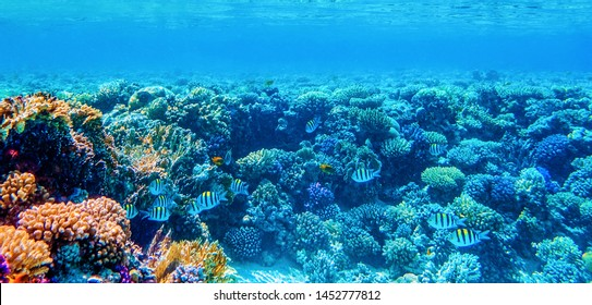 underwater panoramic view with tropical fish and coral reefs