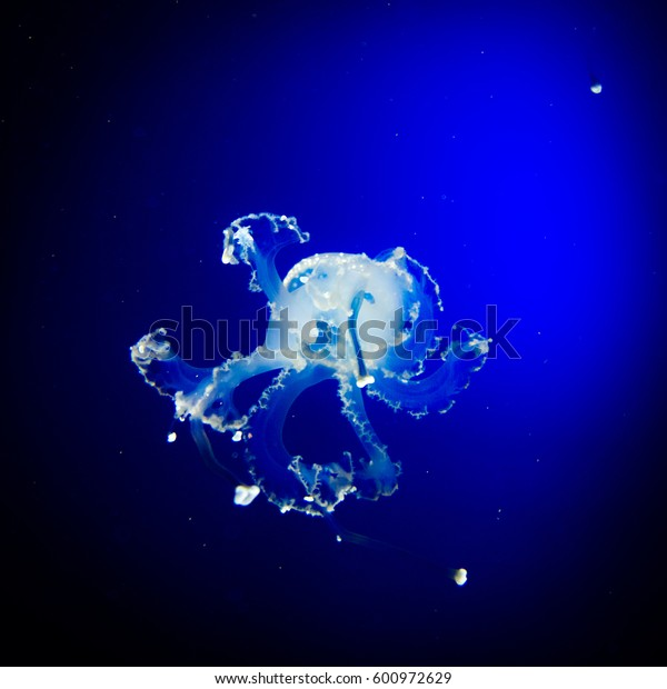 Underwater paradise. Swimming Jellyfish On Blue Background