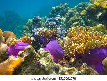 Underwater photo of beautiful corals and bright coral fish of the Indian Ocean. Diving between Thailand and Malaysia in Andaman Sea. Beauty of underwater world in tropical sea - clean and clear water