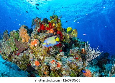 underwater photo, coral and fish