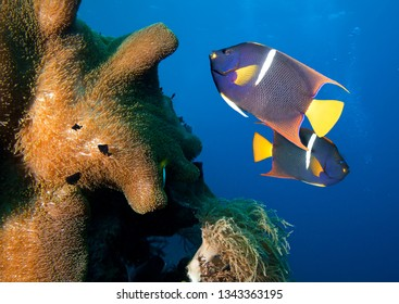 Underwater photo, coral and fish.