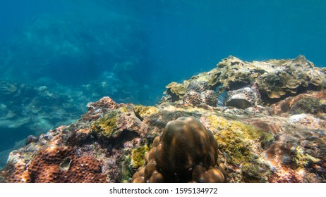 Underwater photo of a coral reef and fish in the tropical sea. Blue clear water, corals of all shapes and colors, lots of fish, sea animals. Andaman Sea of the Indian Ocean. Similan Islands, Thailand