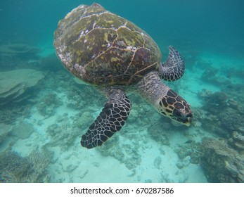 An underwater photo of a turtle swimming above the corals in Maldives