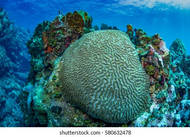 underwater photograph of caribbean reef, with explosion of color. soft corals, hard corals, sponges, sea fans and small reef fish.