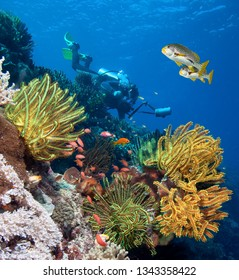 Underwater photographer by beautiful coral reef.