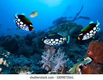 Underwater photographer exploreds coral reef