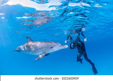 Underwater Photographer with Friendly Dolphin in Clear Waters of Bahamas