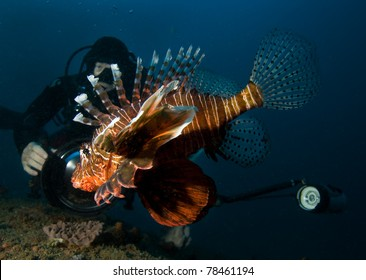Underwater photographer and lionfish